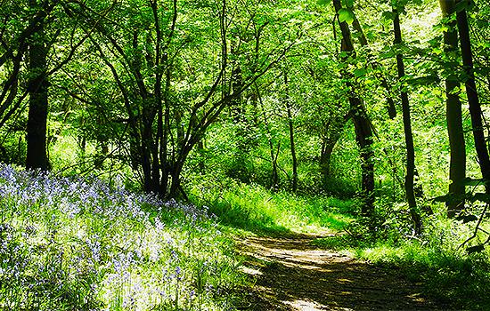 country park Basildon picnic dog walking